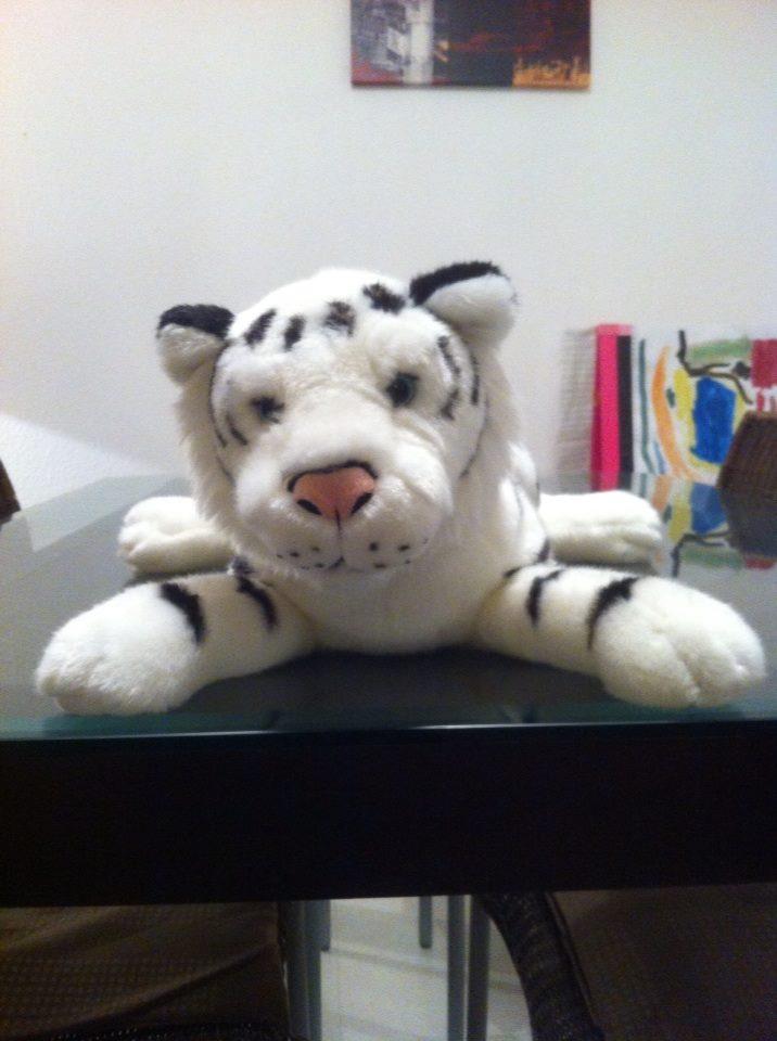 Claude,le petit lion blanc!
