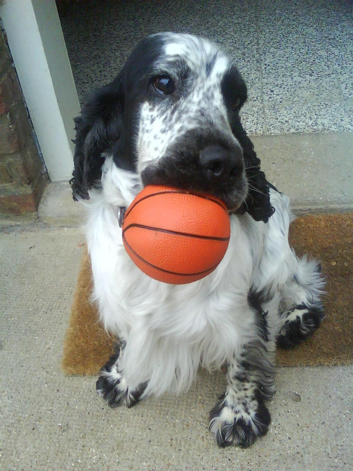 bart basket