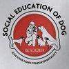 Damien Socialeducationofdog