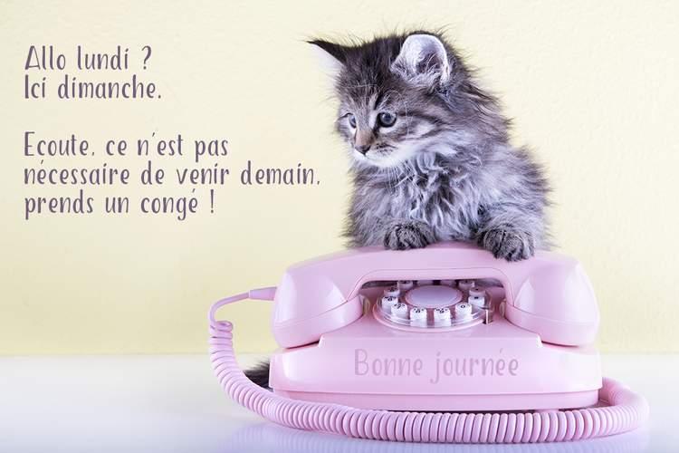 Dimanche 21 février Bon-dimanche-humour__plmgyj