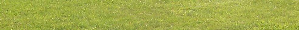 Rougemont Concorde : site officiel du club de foot de ROUGEMONT - footeo